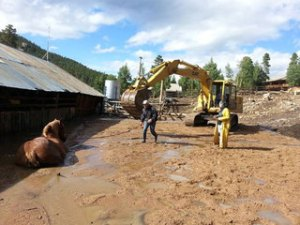 Employees and an excavator operator work to save a draft horse stuck in deep mud at Aspen Lodge Resort & Spa in Estes Park on 9/15/2013.  Kristina Naldjian/Aspen Lodge