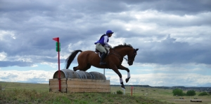 Photo of unknown equestrian sailing over a barrel jump; designers are considering installing one or two at Lory, with barrels donated from our friends at Odell Brewing Company.